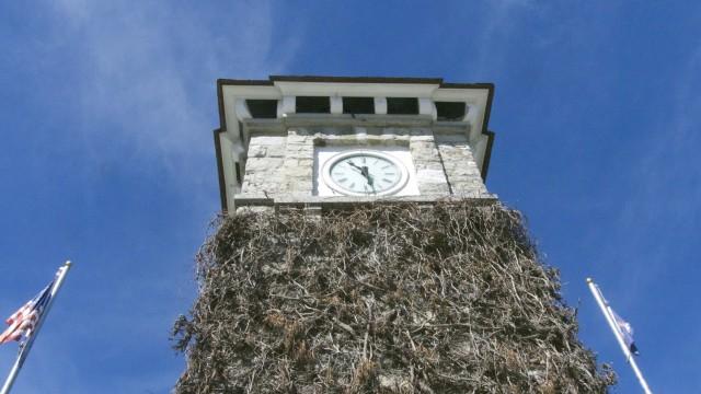 looking at clock
