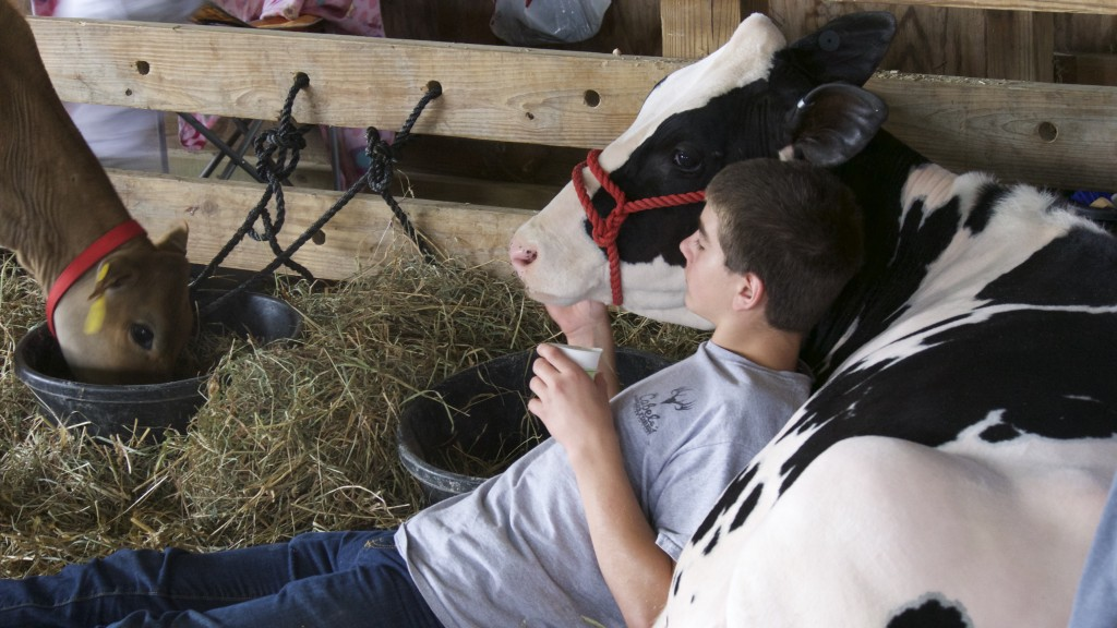 boyh and cow